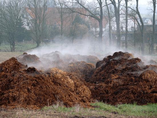 Poop Pile