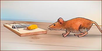 A mouse will be tempted by the mousetrap...